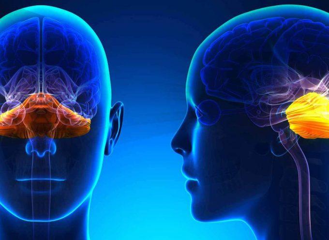 En la página web de CRONIC se informan de más de 112 enfermedades, su alimentación, el ejercicio